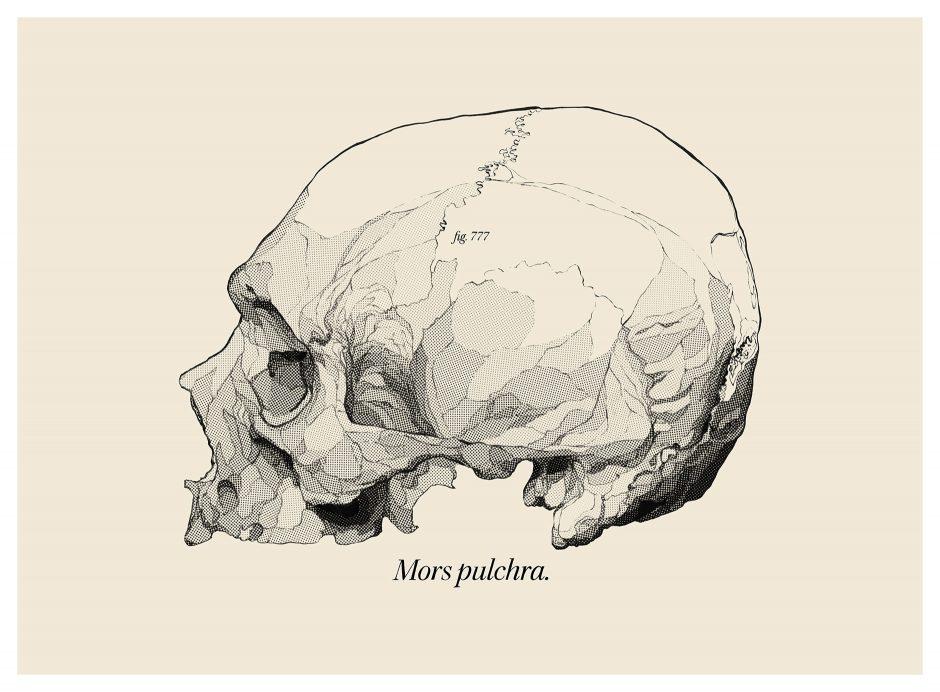 Skull3-1